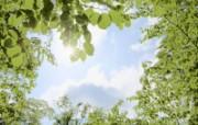 草原 田园 植物绿色高清壁纸 壁纸22 草原田园植物绿色 植物壁纸