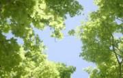 草原 田园 植物绿色高清壁纸 壁纸23 草原田园植物绿色 植物壁纸