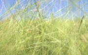 草原 田园 植物绿色高清壁纸 壁纸26 草原田园植物绿色 植物壁纸