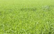 草原 田园 植物绿色高清壁纸 壁纸49 草原田园植物绿色 植物壁纸