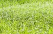 草原 田园 植物绿色高清壁纸 壁纸50 草原田园植物绿色 植物壁纸