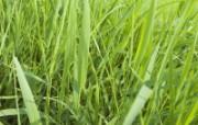草原 田园 植物绿色高清壁纸 壁纸27 草原田园植物绿色 植物壁纸