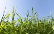 草原 田园 植物绿色高清壁纸 壁纸73 草原田园植物绿色 植物壁纸
