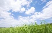 草原 田园 植物绿色高清壁纸 壁纸28 草原田园植物绿色 植物壁纸