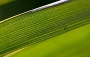 超大叶脉花草壁纸 超大叶脉花草壁纸 植物壁纸