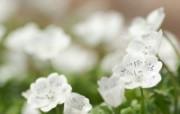 春之追寻:个人花卉摄影壁纸下集 植物壁纸