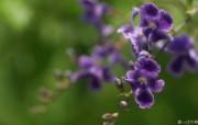 高精度个人花卉摄影集 高精度个人花卉摄影集 植物壁纸