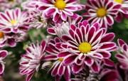 高清宽屏花朵壁纸下载 高清宽屏花朵壁纸下载 植物壁纸