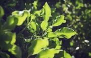 高清宽屏植物摄影壁纸 2010 03 16 壁纸11 高清宽屏植物摄影壁纸 植物壁纸