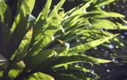 高清宽屏植物摄影壁纸 2010 03 16 壁纸12 高清宽屏植物摄影壁纸 植物壁纸