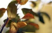高清树叶桌面壁纸下载 高清树叶桌面壁纸下载 植物壁纸