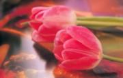 高清鲜花桌面壁纸下载 高清鲜花桌面壁纸下载 植物壁纸