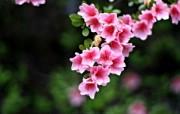 高清晰花朵壁纸 高清晰花朵壁纸 植物壁纸