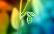 高清晰宽屏植物桌面壁纸 高清晰宽屏植物桌面壁纸 植物壁纸