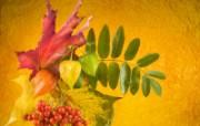 高清晰鲜花宽屏桌面壁纸 植物壁纸