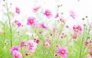 高清晰野花桌面壁纸 高清晰野花桌面壁纸 植物壁纸