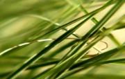 高清晰植物绿叶 植物壁纸