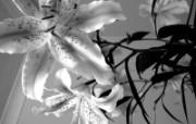 高清植物单反壁纸 2009 04 24 壁纸24 高清植物单反壁纸 2 植物壁纸