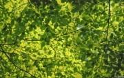 高清植物宽屏壁纸 2009 07 01 壁纸18 高清植物宽屏壁纸 2 植物壁纸