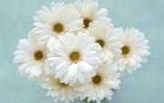 给你家的温馨!室中花精美壁纸 植物壁纸