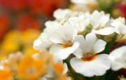 个人花卉摄影壁纸 个人花卉摄影壁纸 植物壁纸
