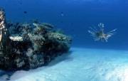 海底世界专辑 海底世界壁纸 植物壁纸
