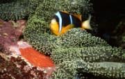 海底世界壁纸 海底世界壁纸 植物壁纸