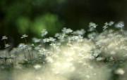 花的写真 植物壁纸