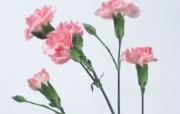 花卉特写 植物壁纸