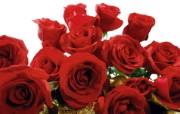 花世界!鲜花系列之玫瑰宽屏壁纸 植物壁纸