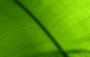 精美Vista花草壁纸特辑完结篇 植物壁纸