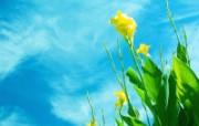 精选热门植物花朵高清壁纸 2009 04 10 壁纸1 精选热门植物花朵高清 植物壁纸