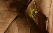 精选热门植物花朵高清壁纸 2009 04 10 壁纸11 精选热门植物花朵高清 植物壁纸