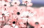 精选热门植物花朵高清壁纸 2009 04 10 壁纸12 精选热门植物花朵高清 植物壁纸
