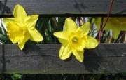 精选热门植物花朵高清壁纸 2009 04 10 壁纸29 精选热门植物花朵高清 植物壁纸