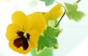 精致美丽的花朵壁纸 植物壁纸