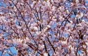 宽屏高清晰花卉写真上集 植物壁纸