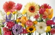 宽屏鲜花特写 宽屏鲜花特写 植物壁纸