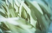 宽屏植物单反壁纸 1920x1200 2009 04 16 壁纸3 宽屏植物单反壁纸 1 植物壁纸