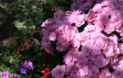 另人陶醉鲜花 另人陶醉鲜花 植物壁纸