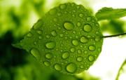 绿叶高清壁纸 植物壁纸