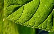 绿叶高清壁纸 壁纸3 绿叶高清壁纸 植物壁纸
