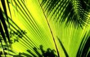 绿叶高清壁纸 壁纸11 绿叶高清壁纸 植物壁纸