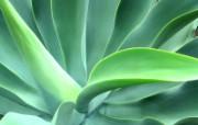 绿叶高清壁纸 壁纸13 绿叶高清壁纸 植物壁纸