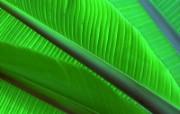 绿叶高清壁纸 壁纸16 绿叶高清壁纸 植物壁纸