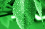 绿叶高清壁纸 壁纸23 绿叶高清壁纸 植物壁纸