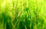 绿叶高清壁纸 壁纸24 绿叶高清壁纸 植物壁纸