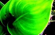 绿叶高清壁纸 壁纸25 绿叶高清壁纸 植物壁纸
