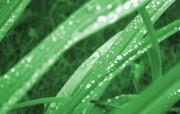 绿叶高清壁纸 壁纸27 绿叶高清壁纸 植物壁纸