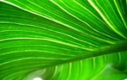 绿叶高清壁纸 壁纸29 绿叶高清壁纸 植物壁纸